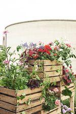 Geranie, Pelargonie, urban gardening, vertical garden, Raumteiler, Obstkiste, upcycling, Balkon, Duftgeranie, Blattschmuckgeranie, DIY