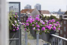 Geranie, Pelargonie, pflegeleicht, Stadtbalkon, Balkon, Balkonpflanze, Sattelbalkonkasten