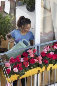 Geranie, Pelargonie, Pflege, pflegeleicht, gießen, Gießkanne, Blütenpracht